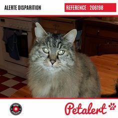 Cette Alerte (206198) est désormais close : elle n'est donc plus visible sur la plate-forme Petalert Suisse. Nous avons retrouvé notre animal Merci pour votre aide. Visible, Aide, Cats, Switzerland, Thanks, Shape, Dog, Animaux, Gatos