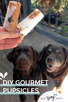 DIY Gourmet Pupsicles Frozen Dog Treat Recipe is part of Dog popsicles recipe - DIY Gourmet Pupsicles Recipe is a great Summer Trea for your dog! Ingredients Peanut Butter, Plain Yogurt, Frozen Blueberries and water Frozen Dog Treats, Diy Dog Treats, Summer Dog Treats, Doggie Treats, Homemade Dog Cookies, Homemade Dog Food, Dog Popsicles, Dog Biscuit Recipes, Dog Recipes