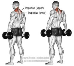 An isolation exercise. Synergistic muscles: Middle Trapezius and Levator Scapulae. An isolation exercise. Synergistic muscles: Middle Trapezius and Levator Scapulae. Traps Workout, Dumbbell Workout, Trapezius Workout, Workout For Flat Stomach, Flat Abs, Back Exercises, Stomach Exercises, Shoulder Exercises, Training Exercises
