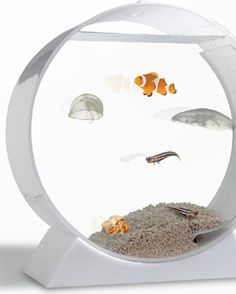 1000 images about jelly fish pets on pinterest for Fish bowl pets