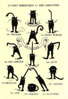 The domestic cat and its character