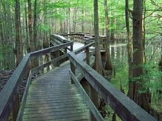 Kisatchie National Forest in LOUISIANA... love the green! Hop into your RV or take the family camping, make sure you've booked one of the top Campgrounds or RV Parks in the state!