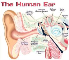 An Overview of the Different Types of Hearing Loss