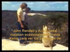 En 1969, Ace Bourke y John Rendall -dos australianos que vivían en Londres- compraron un cachorro de león en el departamento de animales exóticos de los alma...