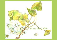 beautiful cotton twig sketch by cathie richardson