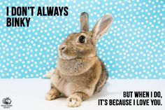 No better way for a bunny to express their joy & happiness than a Binky. No better feeling for bunnies human knowing they are living with a happy binkying bunny !!!!