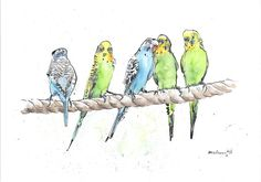 """A Row of Budgies - Daily Bird #11"" by Luci Power. Watercolour on Paper, Subject: Animals and birds, Expressive and gestural style, One of a kind artwork, Signed on the front, This artwork is sold unframed, Size: 21 x 29.5 x 0.1 cm (unframed), 8.27 x 11.61 x 0.04 in (unframed), Materials: 300gsm watercolour paper and Indian ink"