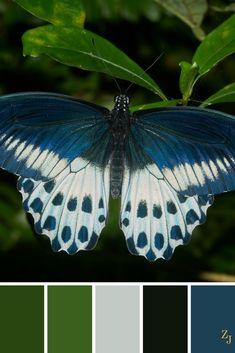 ZJ Colour Palette 178 #colourpalette #colourinspiration