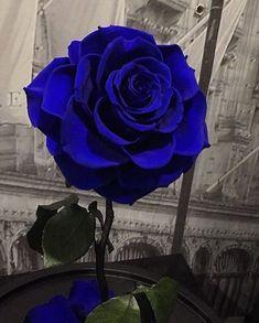 Black Rose Flower, Beautiful Rose Flowers, Exotic Flowers, Amazing Flowers, Exotic Flower Tattoos, Blue Rose Tattoos, Purple Roses, Blue Flowers, Flowers Nature