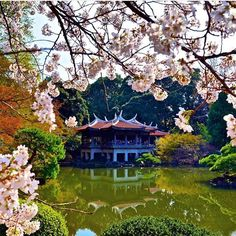 Beautiful Spring in Tokyo #House #Interior #Interiordesign #Home #Villa #Architecture #Archilovers #Realestate #Apartment #Luxury #ny #NewYork #Paris #London #Miami #LosAngeles #Moscow #besthouse #mansion #property #tokyojapan #spring #weather #season