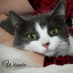 """Winnie has been waiting FOUR YEARS for a home... your re-pins can make that right! She's sweet, healthy, 5 years old, and in Wisconsin. Click her photo (or """"visit"""" on mobile) to learn more!"""