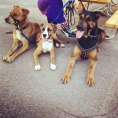 Awesome beautiful dogs