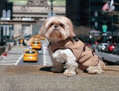Pet fashion: The rise of the four-legged fashionista | Lifestyle - Style, Travel, Weddings & more | Providence Journal