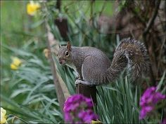 For Pesky Critters On Pinterest Squirrel Companion Planting And Garden Pests