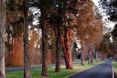 """""""Osborne Cedars"""" (eastern Henrico County) by Ken Hopson (featured in the Richmond Times-Dispatch on October 18, 2014). Fun Fact: This is a 2014 Virginia Vistas Photo Contest Honorable Mention winner in our special Route 5 Corridor Category. ENJOY!!"""
