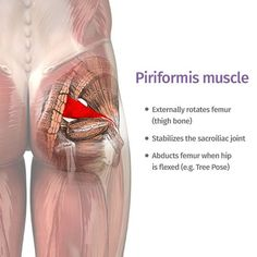 piriformis : how can one little muscle cause so much trouble? Yoga poses and sequences to help with piriformis syndrome - The piriformis : how can one little muscle cause so much trouble? Yoga poses and sequences to help with piriformis syndrome - Sciatic Pain, Sciatic Nerve, Nerve Pain, Hip Pain, Back Pain, Fitness Workouts, Syndrome Pyramidal, Muscle Piriforme, Muscle Pain