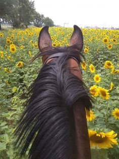 Horseback Riding Trails, Trail Riding, Horse Riding, Arte Equina, Horse Girl Photography, Horse Wallpaper, Horse Ears, Equestrian Gifts, Most Beautiful Horses