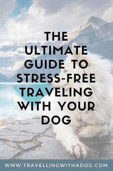 Travel Tips Road Trip With Dog - Travel Camping Snacks, Camping Diy, Camping Theme, Van Camping, Camping With Kids, Camping Store, Camping Jokes, Luxury Camping, Camping Crafts