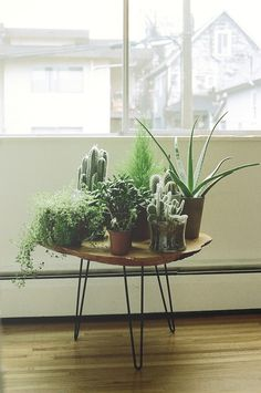 Mid-century hairpin legs with raw wood edge table top. Very reminiscent of hippie days. Oh... wrong plants.