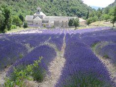 Google Image Result for http://www.ifrenchpropertyfrance.com/blog/wp-content/uploads/2010/12/villas-in-Provence-2548.jpg