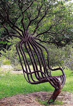 Artist Peter Cook grew this living garden chair using shaping methods, primarily training a living tree through constricting the direction of branch growth. Imagine if we didn't have to cut down trees for these uses!