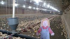 Peanut and Chicken Farmer Math in Alabama