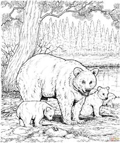 American Black Bear Family coloring page   SuperColoring.com