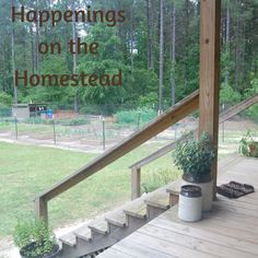 Happenings on the Homestead #136 - Little Frugal Homestead Country Style Ribs, Pickled Okra, Dried Peppers, Homemade Ranch Dressing, Bacon On The Grill, Blueberry Bushes, Grilled Teriyaki Chicken, Chili Dogs, Yukon Gold Potatoes