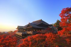 Win A Dream Trip To Kyoto, Japan!
