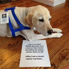 """""""I am a certified TOUCH dog and I visit a Cancer Care Center spreading my unique canine cheer to all! *Also I am a recent cancer survivor..."""""""