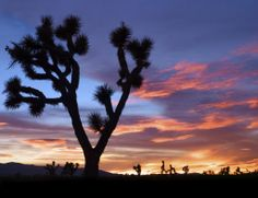 #joshuatreenationalpark #usa #california #joshuatree