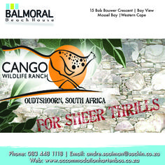 The Cango Wildlife Ranch are situated just outside of Oudtshoorn in the Garden Route's Little Karoo, South Africa. In a world like no other, at this fully accredited zoological park.