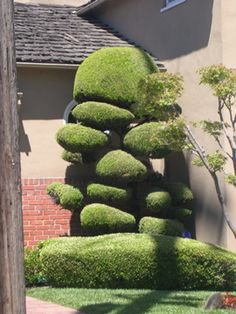 Cloud pruned topiary