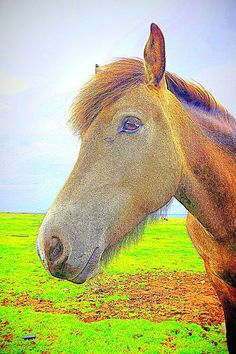 Have Loved You Dearly Horse Face, My Horse, Horses, Character Types, Canvas Prints, Framed Prints, Rocky Balboa, Am In Love, Famous Artists