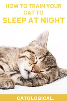 Stop your cat from waking you up all hours of the night with these great tips of how to train your nocturnal cat to sleep at night--so you can too! #CatTraining #CatTips #CatFacts Cat Ages, Cat Info, Nocturnal Animals, Kitten Care, Cat Care Tips, Cat Health, Health Tips, Cute Kitten Gif, Cat Behavior
