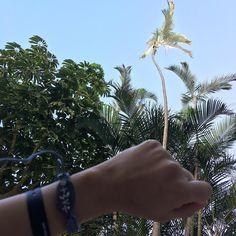 Edita ha elegido esta bonita piedra de la playa volcánica de #Tarajalejo para su #Palmita azul #Aboriginal #Talisman #Natural con su nombre en #CanariumAbecedarium en plata #beachtreasures #beachstone #beachboutique #inimitable #slowlife #filosofiapalmera #Tarajalejo #Fuerteventura
