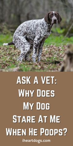 Ask A Vet: Why Does My Dog Stare At Me When He Poops?