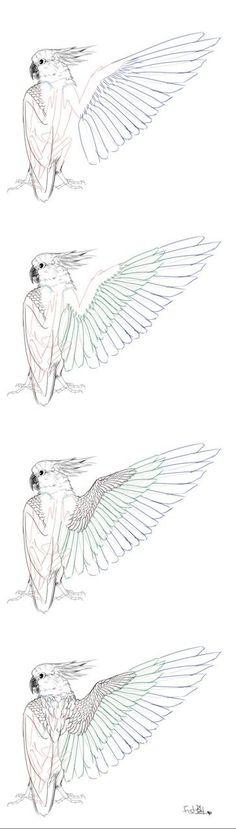 9 Best Bird Wings Images On Pinterest