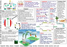 Lovely revision posters that learners can fill in for AQA B3 units!