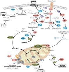 Ketogenic Diet Scientific Articles