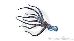 Deep sea octopus isolated