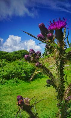 Scotland in just one pin! #travelfeels #rabbiestours Image by Driver / Guide Gill B