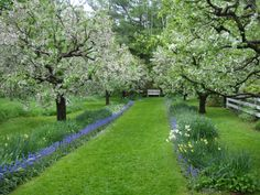 Pretty country fruit tree allee
