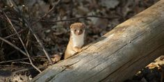Large Hadron Collider reportedly knocked out by damn pesky weasel
