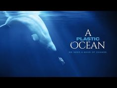 New Must-See Documentary: 'A Plastic Ocean' - The Daily Catch | The Daily Catch | TerraMar Project