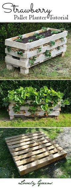 Grow strawberries in small spaces! Tutorial on how to build and plant a better Strawberry planter using a single wooden pallet #containergarden #pallet #growstrawberries