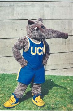 Top 10 Bad (Worst) College Mascots  Univ. of Cal. @ Irvine - Anteater