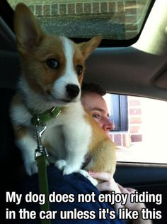 28 pictures just to make you smile. 28 pictures just to make you smile funny animal videos Funny Animal Videos, Funny Animal Pictures, Animal Memes, Funny Animals, Cute Animals, Pet Videos, Quote Pictures, Animal Pics, Dog Pictures