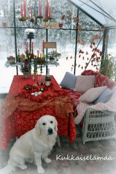 Mikki kasvarissa - Mickey in the greenhouse Shag Rug, Google, Free, Home Decor, Shaggy Rug, Decoration Home, Room Decor, Blankets, Home Interior Design