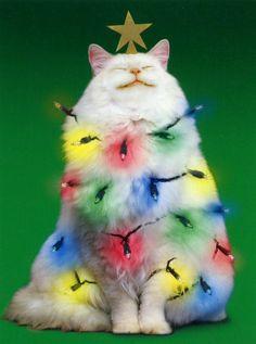 Deck the Halls with Rainbow Fur-Balls, Fa-la-LA-la LAAA - La la la LAAA!